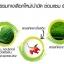 The Secret Wheatgrass Chlorophyll เดอะซีเคร็ท วีทกราส คลอโรฟิลล์ thumbnail 5